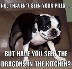No, I Haven't seen your pills.... But have you seen the dragons in the kitchen?