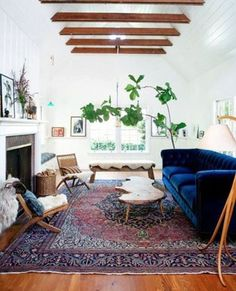 Love this Space, but I'm a total sucker for a deep blue sofa and a gigantic fiddle leaf!!