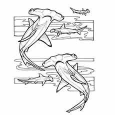 Shark Adult Coloring Pages Unique Hammerhead Shark Coloring Page Ocean Coloring Pages, Animal Coloring Pages, Coloring Pages For Kids, Kids Coloring, Colouring, Tatuagem Old Scholl, Hai Tattoos, Hammerhead Shark Tattoo, Shark Drawing