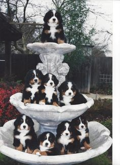 Fountain of puppies.......awww....