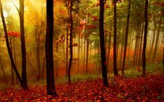 fall landscapes - Google Search