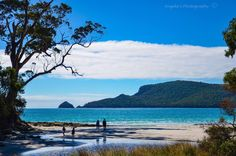 Adventure Bay on Bruny Island Bruny Island, Tasmania, Australia Travel, New Zealand, Wander, Traveling By Yourself, Places To Go, Beautiful Places, America