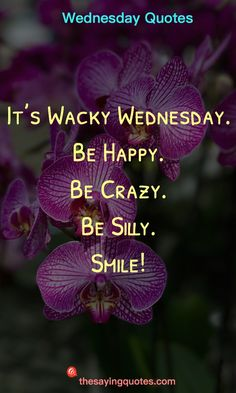 It's Wacky Wednesday. Be Happy. Be Crazy. Be Silly. Wednesday Sayings and Quotes to push thought the week by The Saying Quotes. We hope these Wednesday quotes will brighten your mid-week. Wednesday Morning Images, Wednesday Quotes And Images, Funny Wednesday Memes, Happy Wednesday Pictures, Blessed Wednesday, Happy Wednesday Quotes, Wacky Wednesday, Wednesday Motivation, Happy Quotes