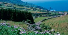 The colourful flora of the Azores | via Sunvil | Imagine an island filled with the most colourful flowers in bloom where even the hedges that frame the quiet lanes are made of up of miles of vibrant hydrangea bushes. If we add in a sprinkling of banana and pineapple trees you'll probably have placed your imaginary island somewhere in the Caribbean. Yet the Azores, a group of nine small volcanic islands in the North Atlantic Ocean, are still a part of Europe... #Portugal