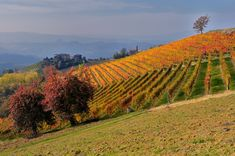The Langhe are a large hill region in the north-west of Italy, a land of full-bodied wines and people accustomed to hard work, a scene of m. History Of Wine, Piedmont Italy, Wine Vineyards, North West, Scene, Travel, Bella, Outdoor, Landscapes
