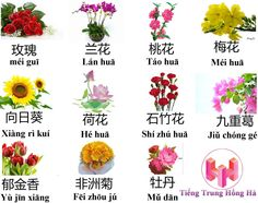 Tên những loài hoa