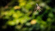 Spider by Rico Radau