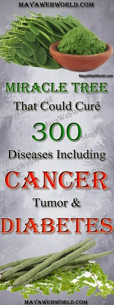 Miracle Tree That Could Curé 300 Diseases Including Cancer Tumor And Diabetes – MayaWebWorld