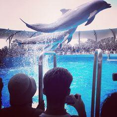 Miami Seaquarium in Key Biscayne, FL