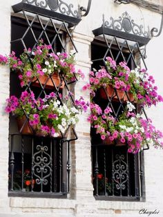 """""""Petunias en las ventanas"""".Granada.  Caro, can I have these window boxes for our casa?............."""