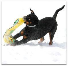 Welcome To Greendale Rotts Rottweilers, Jaba, Friends, Amigos, Rottweiler, Boyfriends