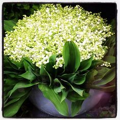 Happy May Day! La Fete du Muguet! Celebrate like the French by sharing bouquets of Lily of the Valley to friends and family.