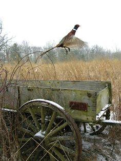mi-muy-propia-vida-en-el-bosque: (fuente: pinterest.com)
