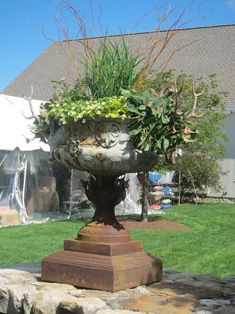 low maintenance hot weather urn plant - Google Search
