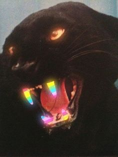 panther, rainbow