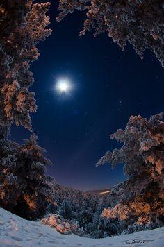 A trail of fox in the snow under moon, Navacerrada, Madrid, Spain