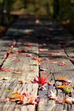 como as folhas do outono, estou deixando cair meus medos e sentimentos que já não irão florir na primavera dos meus sonhos. Mari.
