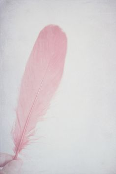 PINK Feather _____________________________ Reposted by Dr. Veronica Lee, DNP (Depew/Buffalo, NY, US)