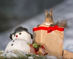 Celebrate Christmas with Squirrels (8)