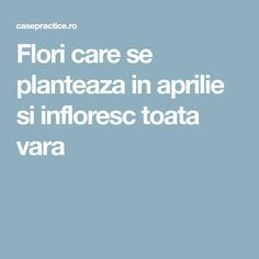Flori care se planteaza in aprilie si infloresc toata vara Wisteria, Home And Garden, Herbs, Gardening, Flowers, Agriculture, Plant, Lawn And Garden, Herb