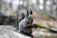 Squirrel by Andreas Black on 500px
