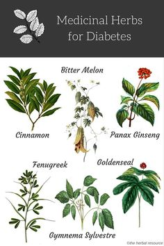 Herbal Medicine Medicinal herbs for diabetes. - Information on the side effects, health properties, active substances and side effects of medicinal herbs for diabetes treatment and relfief Memes Diabetes, Diabetes Tipo 1, Cure Diabetes, Diabetes Recipes, Diabetes Remedies, Diabetes Diet, Diabetes Medicine, Healing Herbs, Medicinal Plants