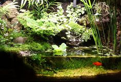 paludarium-20100828 by rumirunto, via Flickr