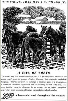 Tunnicliffe Society - Boots the Chemist Nature Artists, Ladybird Books, British Wildlife, Chemist, Vintage Paper, Natural History, Moose Art, Horses, Boots