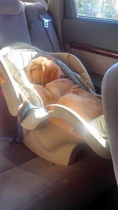Shhh the baby is sleeping - Imgur