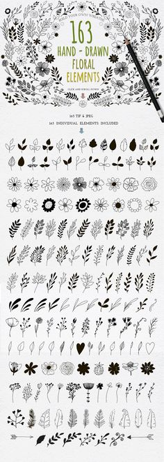 Hand Drawn floral elements - Illustrations - 1