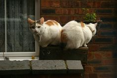 Twin cats on ladder
