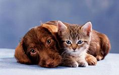 cats-and-dogs-together:    Good Morning tumblr friends :)