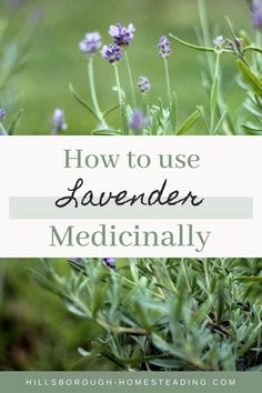 Healthy living means partnering with powerful herbal remedies. Lavender is a huge part of our homestead lifestyle - providing relaxation bug spray beauty AND food! Click the pin to learn more! Natural Medicine, Herbal Medicine, Herbal Remedies, Natural Remedies, Lavender Benefits, Growing Lavender, Healty Dinner, Lavender Garden, Herbs For Health