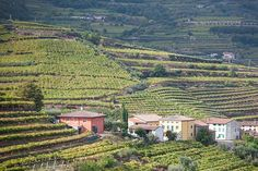 Soave Wine Country is a great place to visit for those that love wine. It is much less crowded than other wine regions of Italy. Wine Country, Vineyard, Photography, Outdoor, Vine Yard, Fotografie, Outdoors, Photograph, Vineyard Vines