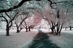 Le chemin de nos rêves Viera, Snow, Outdoor, Paths, Outdoors, Outdoor Games, Outdoor Living, Eyes