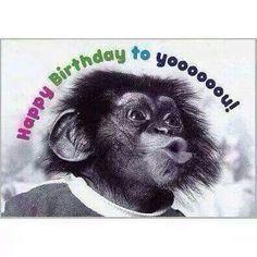 Birthday Posts, Happy Birthday Pictures, Happy Birthday Funny, Happy Birthday Messages, Happy Birthday Quotes, Birthday Love, Happy Birthday Greetings, Funny Birthday Cards, Monkey Birthday