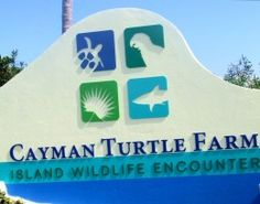 Grand Cayman Island--NEATEST PLACE IN THE WHOLE WORLD.