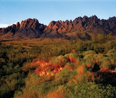 Desert South West Las Cruces New Mexico