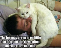 Image of: Quotes Cat Pics With Funny Captions Funny Cat Pictures With Captions November 2011 Carl Sandburg Funny Bae 99 Best Funny Cat Captions Images Funny Animals Cut Animals