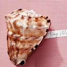King Helmet - America's Most Popular Seashells - Coastal Living