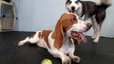 #dogtrainingboston Dog Training Classes, Dog Obedience Training in Boston and Quincy MA… We also offer a combination of private lessons and group classes. Visit for more info: http://www.brianskennels.com