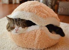 pain à hamburger géant pour chat