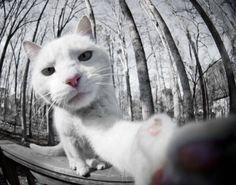 キュンキュンし過ぎて苦しい...ネコの「自撮り画像」34選