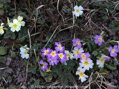 12von12 - viel Blühendes Plants, Bud, Daffodils, Natural Garden, Allotment, Cutest Dogs, Plant, Planets