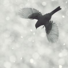 birds in the snow  | by Mingta Li