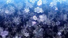 Winter snowflakes falling .