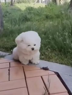 Cute Funny Dogs, Cute Funny Animals, Cute Cats, Baby Animals Super Cute, Cute Little Animals, Cute Baby Puppies, Cute Animal Pictures, Funny Animal Videos, Animals Beautiful