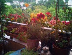 Balcon, en soirée, après la pluie....