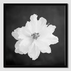 Minted for west elm – Peony | west elm