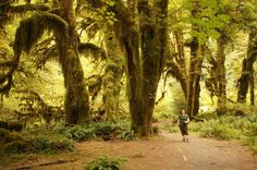 A beautiful hiking trail with trees covered in mosses   khmerkromonline.com